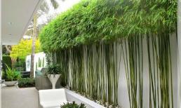 Trồng cây gì trước nhà cho hợp phong thủy, đem may mắn, tài lộc đến cho gia chủ?