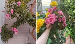 Mẹ đảm sở hữu vườn hồng hơn 200 loại khác nhau tiết lộ 9 điều nhất định cần nhớ nếu trồng hoa tại nhà