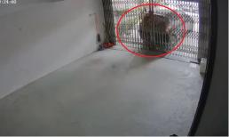 Quên kéo phanh tay, ô tô tụt dốc ép tài xế dính chặt vào cửa gara