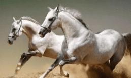 Tuổi ngựa sinh vào tháng nào là tốt nhất, phúc khí tràn trề, hứa hẹn cuộc sống giàu sang phú quý?