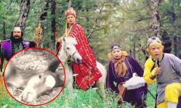 Cái chết bi thảm ngoài đời của chú ngựa Bạch Long trong 'Tây Du Ký'
