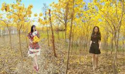 Loài hoa có nguồn gốc Nam Mỹ nở vàng rực ở Bắc Giang, dân tình chỉ muốn lao đến checkin luôn và ngay