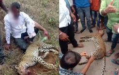 Một người đàn ông Ấn Độ đi xe máy về nhà thì bị báo hoa mai tấn công và anh đã siết cổ con báo đến chết bằng tay không