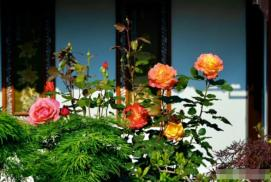 Những người có 5 tư duy này không thể trồng hoa! Bạn có không?