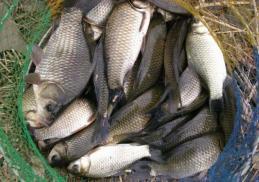 Đi mua cá mà gặp ngay 4 loại cá này thì đừng mua, phí tiền mà hại thân