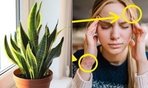 8 loại cây phổ biến đặt trong nhà đang dần đầu độc sức khỏe của bạn