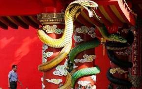 'Chùa rắn' duy nhất trên thế giới, có cả rắn lục sống trong chùa! Du khách: chúng tôi không sợ gì cả
