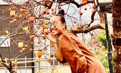 Đến Nhật Bản đúng mùa hồng, ca sĩ Đoan Trang thoải mái vặt hái trái ven đường thưởng thức miễn phí