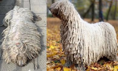 Cứ ngỡ cây lau nhà, hóa ra lại là chú chó nổi tiếng thế giới