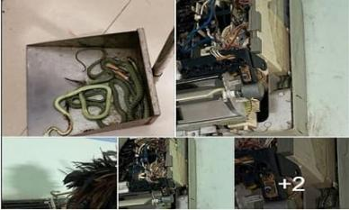 Gọi thợ đến sửa điều hòa, gia chủ kinh hãi khi cả ổ rắn làm tổ bên trong