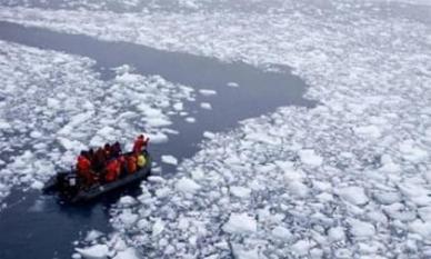 Nam Cực xuất hiện một loài mới, được đặt tên là 'cá băng'