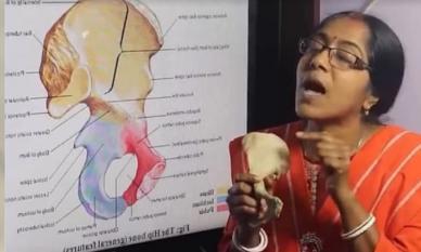 Tại sao nhiều người Châu Á có 204 chiếc xương, nhưng người Châu Âu và Châu Mỹ có 206 chiếc? Hai mảnh ghép còn thiếu ở đâu?