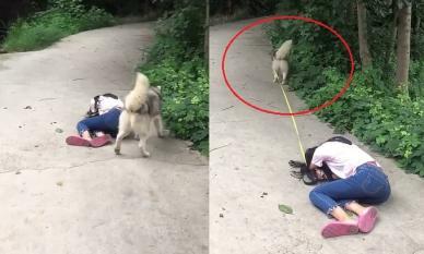 Giả chết để thử lòng thú cưng, ai ngờ hành động của chú chó khiến cô chủ chỉ biết bất lực