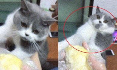 Phản ứng 'điếng người' của chú mèo khi ngửi mùi sầu riêng khiến dân mạng bật cười