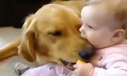 Chú chó vồ lấy giành đồ chơi và bị em bé cắn, nhưng rồi bé bất ngờ la hét khiến cả nhà chết lặng!