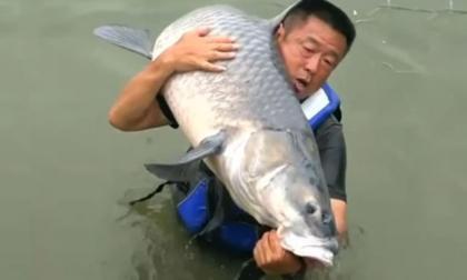 """Cần thủ chinh phục """"thủy quái"""" cá trắm đen gần 75kg"""