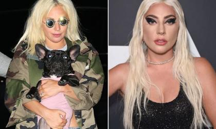 Lady Gaga rao 11,5 tỷ đồng để chuộc chó sau khi người dắt thú cưng của cô đi dạo bị bắn