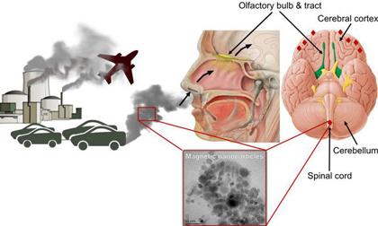 bệnh bạch cầu, ô nhiễm, độc hại trong nhà, trang trí ô nhiễm,