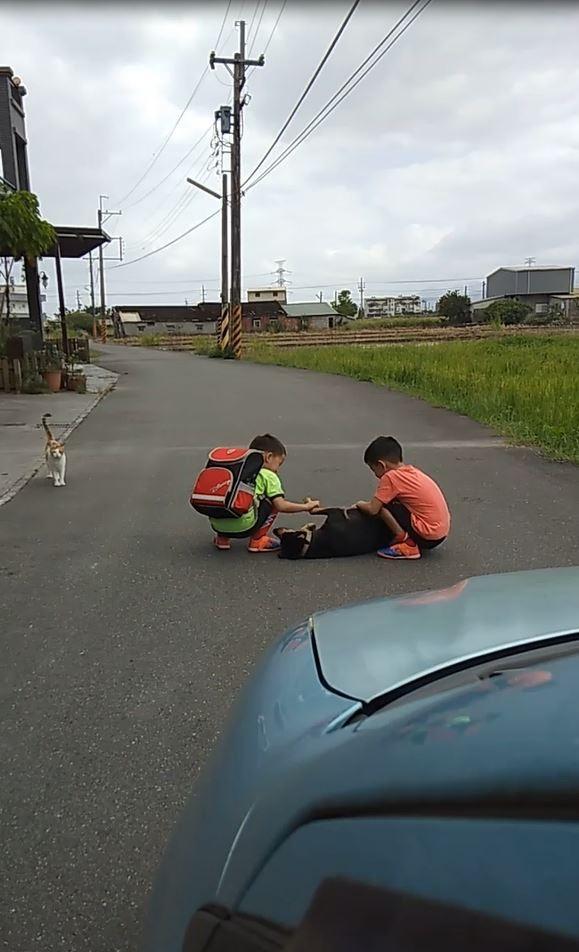 câu chuyện thú vị, chú chó nằm giữa đường, chú chó cản đường người phụ nữ