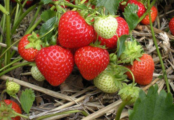 3 loại trái cây được mệnh danh là 'nữ hoàng' ngăn ngừa lão hóa, phụ nữ 40 tuổi không nên bỏ qua