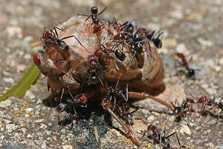 kiến, động vật, động vật hoang dã