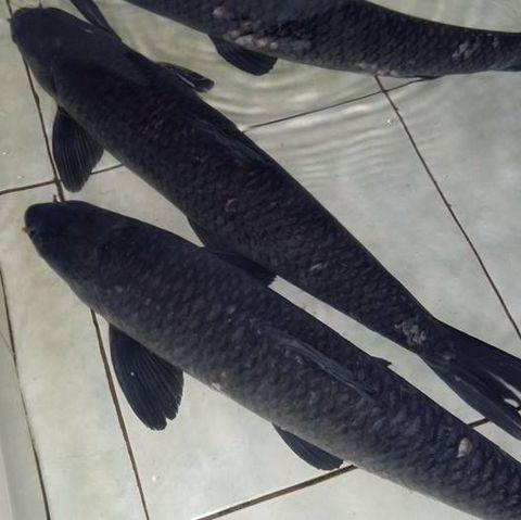 món ngon mỗi ngày, cách chế biến cá ngon, cá ngon được chế biến như thế nào