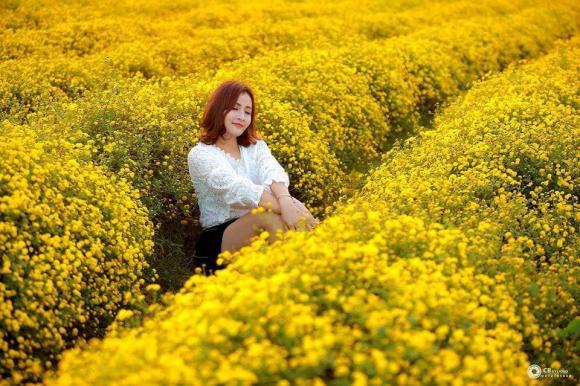 Xách balo đến Ninh Bình ngắm cánh đồng hoa cúc chi vàng rực cả một góc trời
