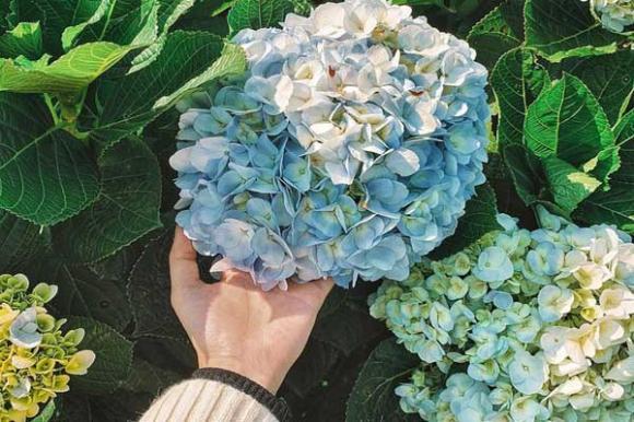 hoa tết, hoa có độc, trẻ em, hoa phong thuỷ