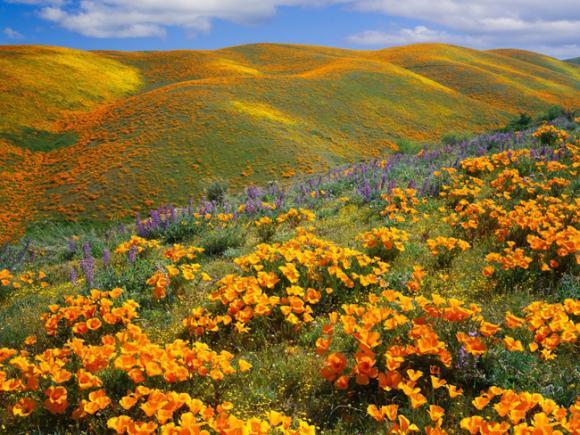 Những vườn hoa xuân đẹp nhất thế giới bạn nên ghé thăm một lần trong đời