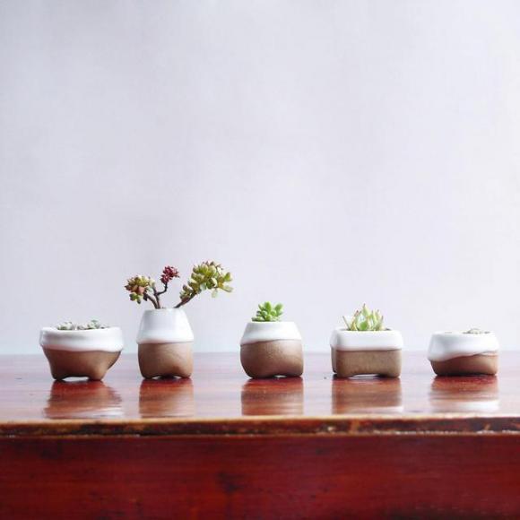 cây cảnh, cây trồng phòng ngủ, trồng phòng ngủ