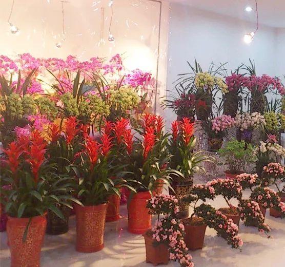 chọn cây cảnh, chọn hoa, chọn hoa cưới, khai trương, mừng thọ, mừng sinh nhật