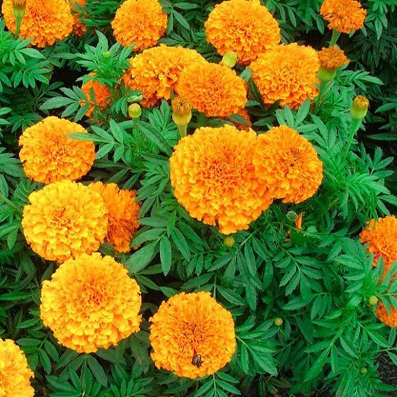 Loài hoa không đặt trên bàn thờ, kiêng kỵ ngày tết, Tết nguyên đán