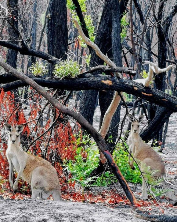 thảm họa cháy rừng ở úc, cháy rừng, cháy rừng ở úc