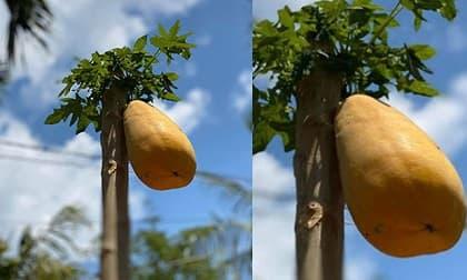 nước ép trái cây, sinh tố, giảm cân
