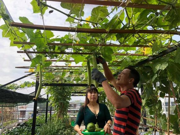 sân thượng, trồng rau trên sân thượng, cải tạo nhà
