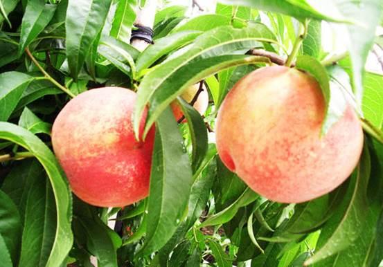 4 loại trái cây cần hạn chế bé ăn vào mùa hè, chăm sóc sức khỏe cho trẻ, lưu ý khi chăm sóc sức khỏe