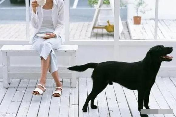 Đàn ông tốt không nuôi mèo, phụ nữ tốt không nuôi chó, câu nói truyền miệng, quan niệm xưa