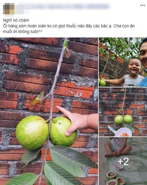 giới trẻ, ăn ổi, ăn quả nhà hàng xóm