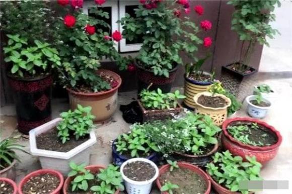 kinh nghiệm trồng cây, cây trong nhà, tưới cây vào buổi sáng hay buổi tối, tưới cây, cây cảnh