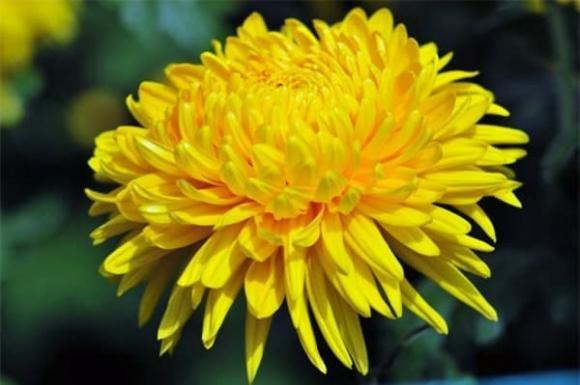thờ cúng, đầu tháng, hoa cúng