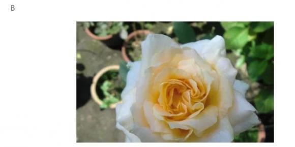 chọn hoa, trắc nghiệm, kiểm tra tâm lý
