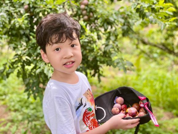 Đan Lê, MC Đan Lê, con Đan Lê, sao Việt