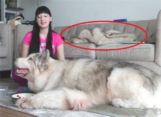 chuyện lạ, con chó, vật nuôi