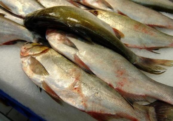 kinh nghiệm đi chợ, mua cá, mẹo hay