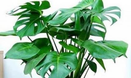 cây cảnh, trồng cây cảnh trong nhà, kiến thức