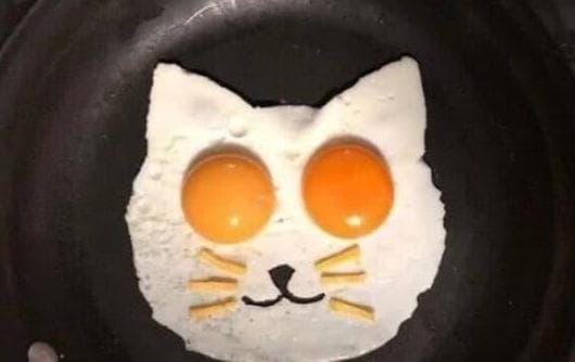 trắc nghiệm, ảnh đố, trứng rán
