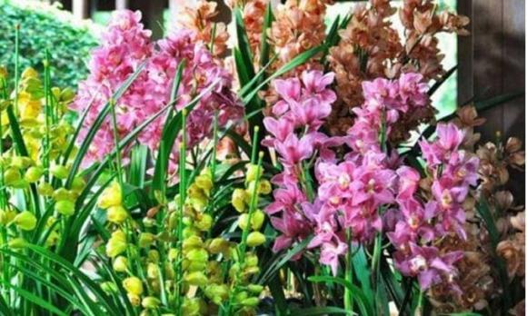 cây cảnh, hoa cây cảnh, cây hợp mùa thu đông,
