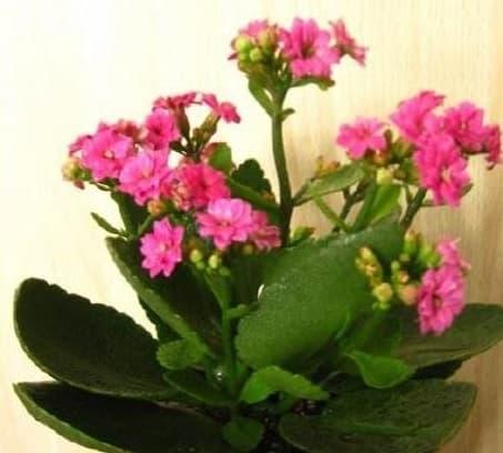 tại sao mua cây hoa về thường chết, kiến thức về chăm sóc hoa, lưu ý khi chăm sóc hoa