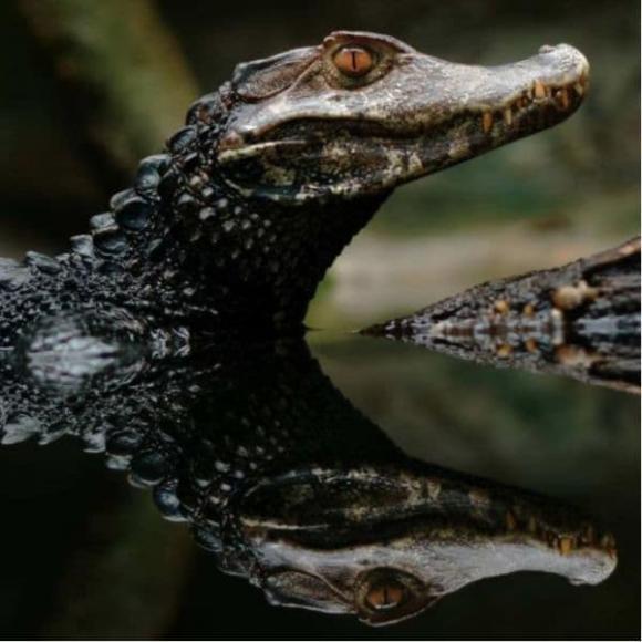 Amazon, động vật Amazon, chuyện lạ, động vật đáng sợ,