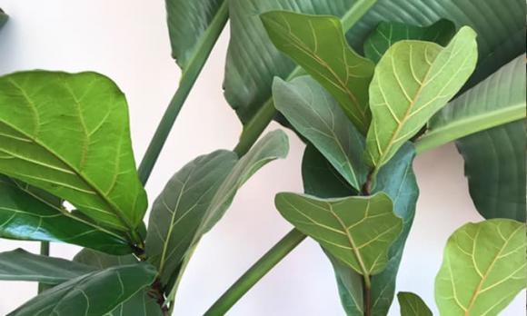 cây trong nhà, cây cảnh, cây tốt cho sức khỏe